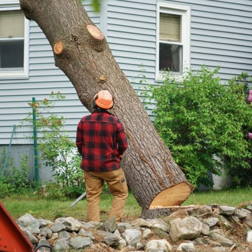 Why You Need a Specialist to Your Remove Trees